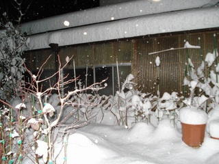 2011雪01.jpg
