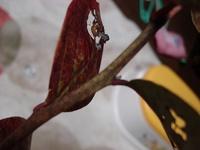 トロの茎.jpg