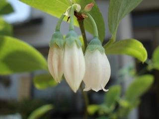 パムリコ花2.jpg