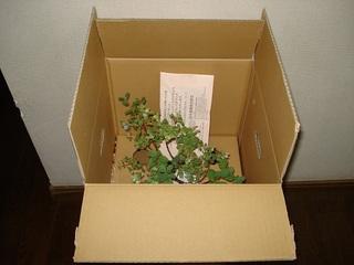 日光種苗の梱包.jpg