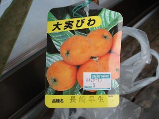 びわ長崎早生ラベル.jpg