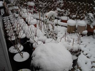 再び雪国01.jpg