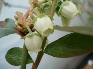2010スターの花.jpg